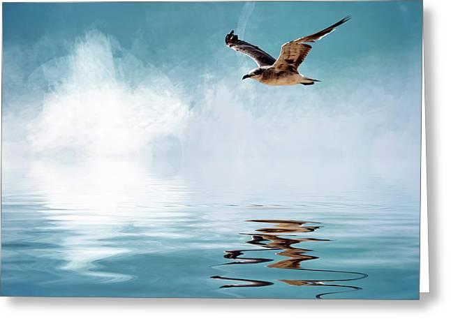 Seagull In Flight Greeting Card by Cyndy Doty