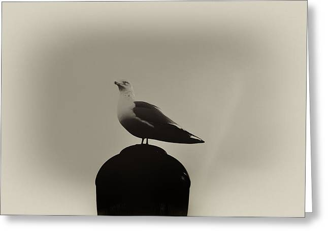 Seagulls Digital Greeting Cards - Seagull in Sepia Greeting Card by Bill Cannon
