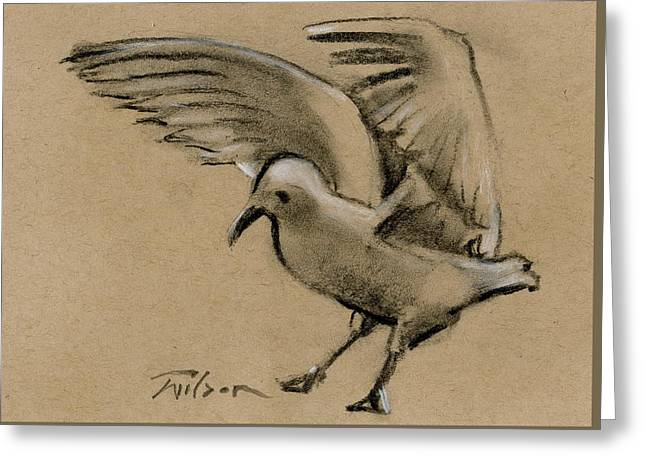 Seagull Landing Greeting Card by Ron Wilson