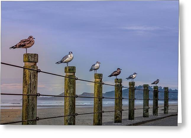 Seagull Lineup Greeting Card