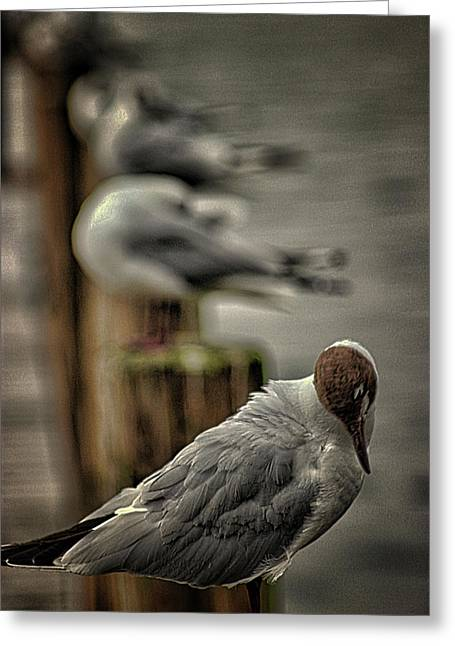 Seagull Lookout Greeting Card by Martin Newman