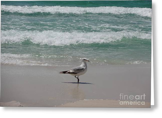 Seagull Greeting Card by Megan Cohen