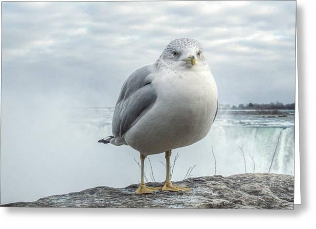 Seagull Model Greeting Card