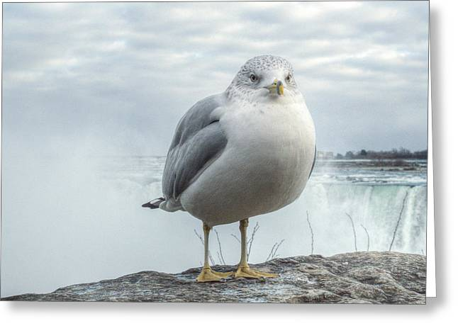 Greeting Card featuring the photograph Seagull Model by Garvin Hunter