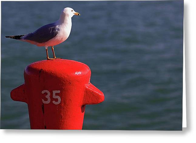 Seagull Number 35 Greeting Card