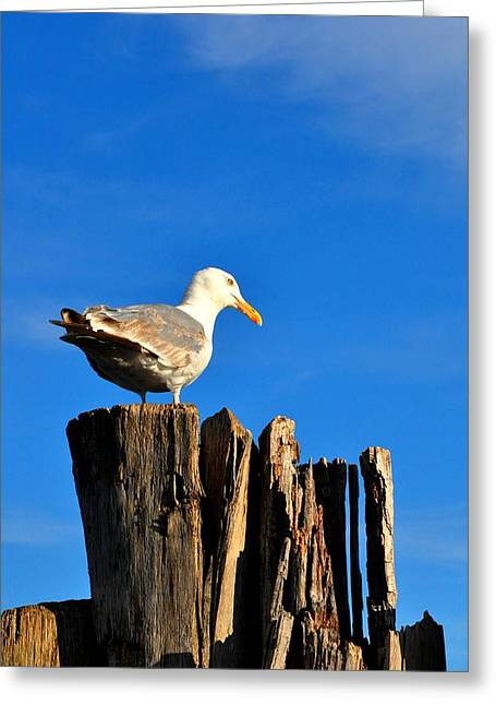 Seagull On A Dock 2 Greeting Card by Andrew Dinh