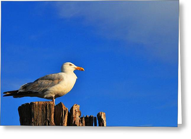 Seagull On A Dock Greeting Card by Andrew Dinh
