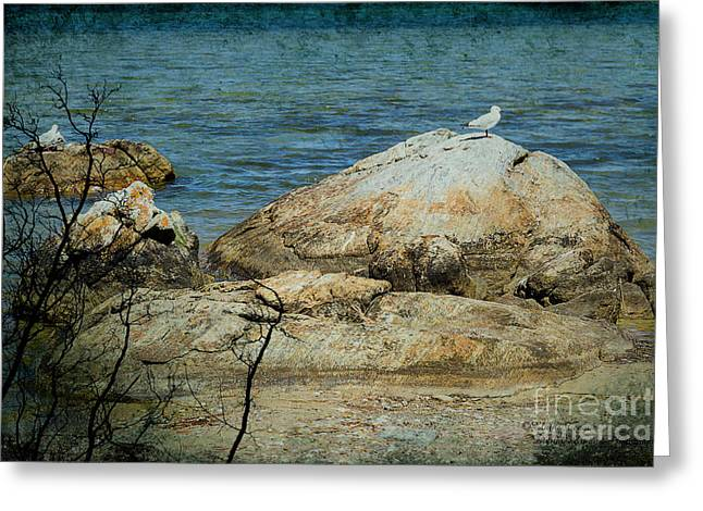 Seagull On A Rock Greeting Card