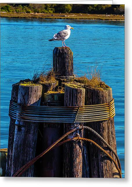 Seagull On Pilings  Greeting Card