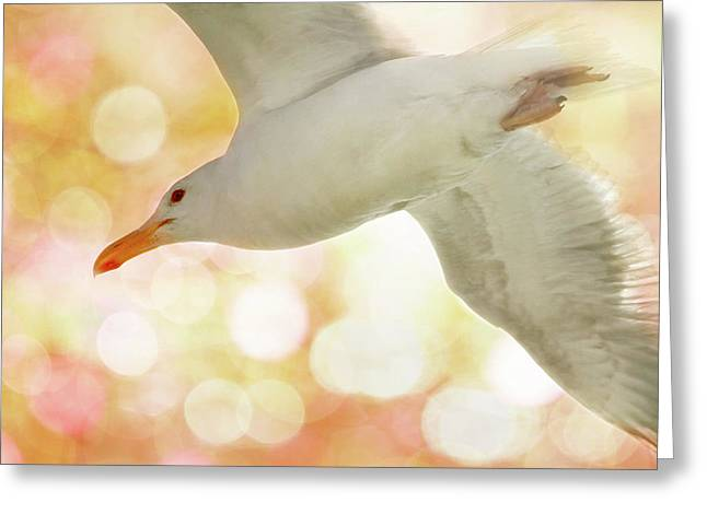 Seagull On Pink And Yellow Sky Greeting Card