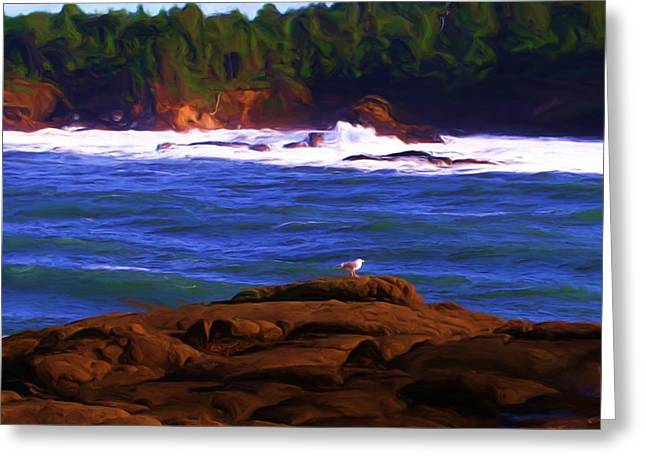 Seagull On Rock Greeting Card by Shelley Bain