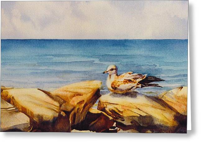 Seagull-on-the-rocks Greeting Card by Nancy Newman