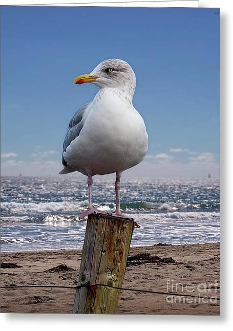 Seagull On The Shoreline Greeting Card