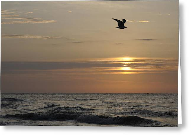 Seagull Over Atlantic Ocean At Sunrise Greeting Card by Darrell Young