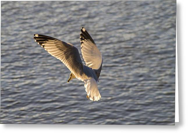 Seagull Over Cape Fear River Greeting Card