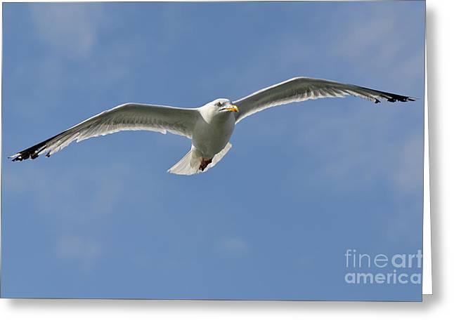 Seagull Patrol Greeting Card by Steev Stamford