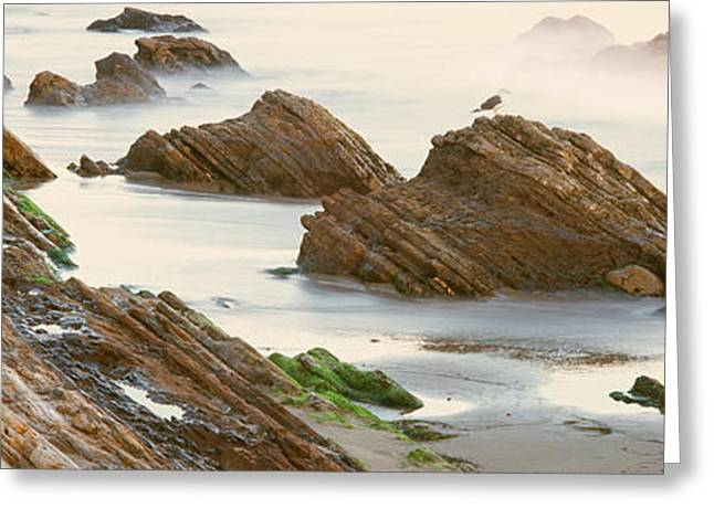 Seagull Perching On The Beach, Gaviota Greeting Card