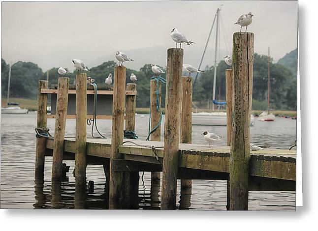 Seagull Pier Greeting Card