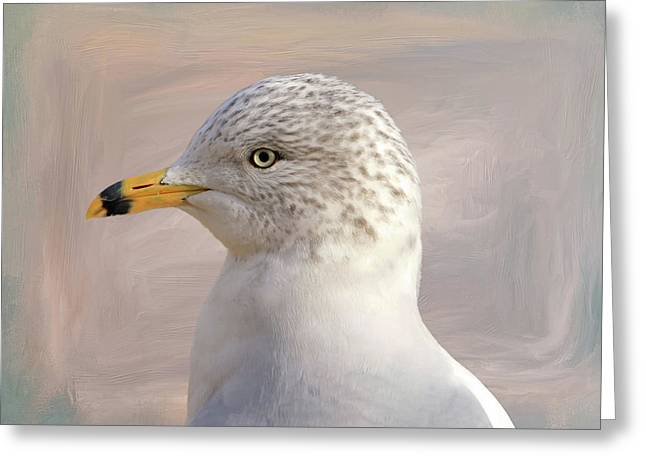 Seagull Portrait Greeting Card by Donna Kennedy