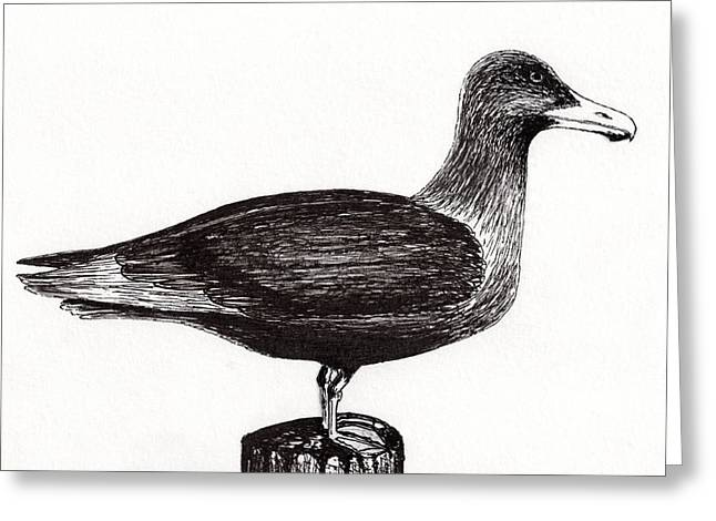 Seagull Portrait On Pier Piling E3l Greeting Card
