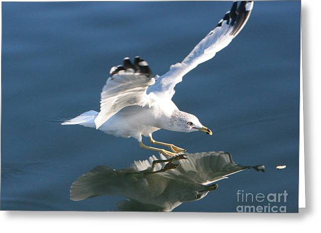 Seagull Reflection Greeting Card
