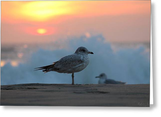 Seagull Seascape Sunrise Greeting Card