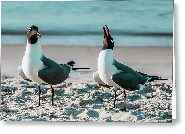 Seagull Serenade 4954 Greeting Card