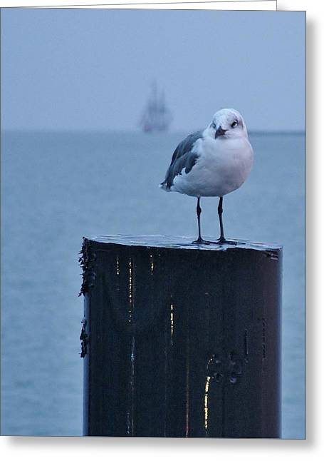 Seagull Ship Greeting Card