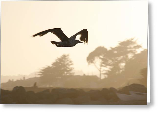 Seagull Sihlouette Greeting Card by Marilyn Hunt