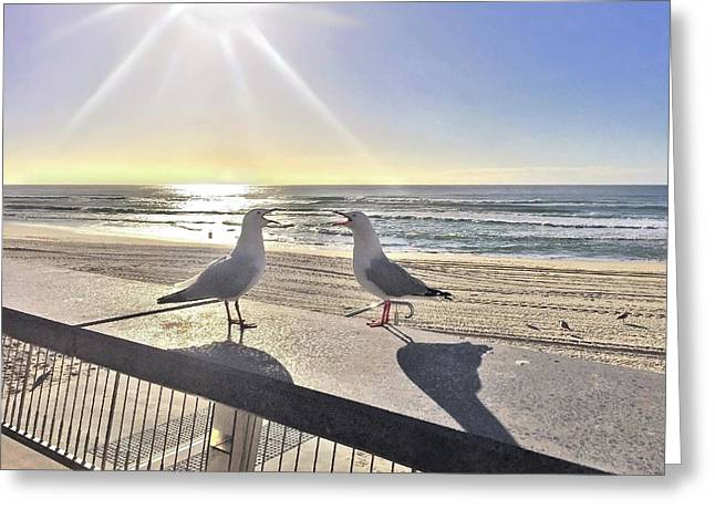 Seagull Sonnet  Greeting Card