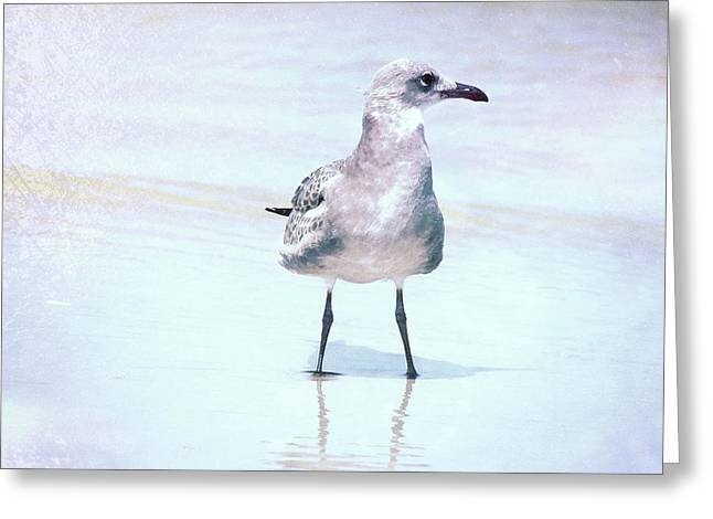 Seagull Stance Greeting Card by JAMART Photography