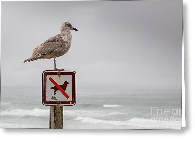 Seagull Standing On Sign And Looking At The Ocean Greeting Card