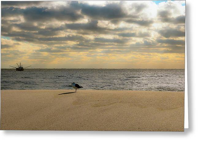 Seagull Stands Alone At Sunrise Greeting Card by Greg Rogers