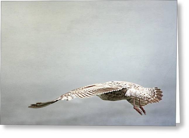 Seagull Still Life 1 Greeting Card