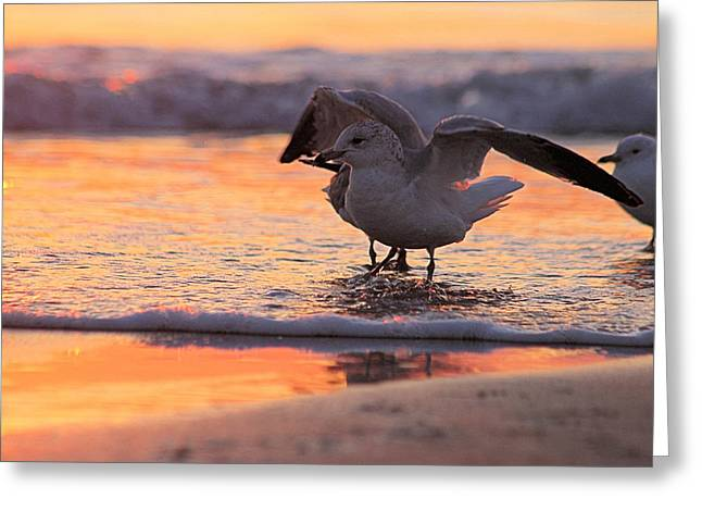 Seagull Stretch At Sunrise Greeting Card