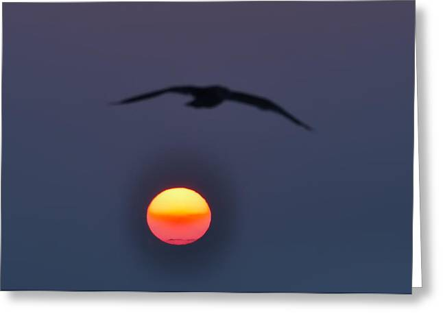 Seagull Sun Greeting Card by Bill Cannon