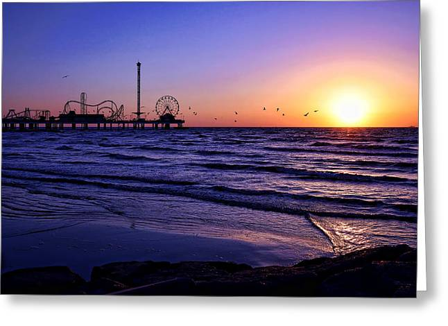 Seagull Sunrise Greeting Card