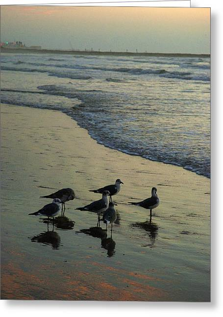 Seagull Sunrise Greeting Card by Robert Anschutz
