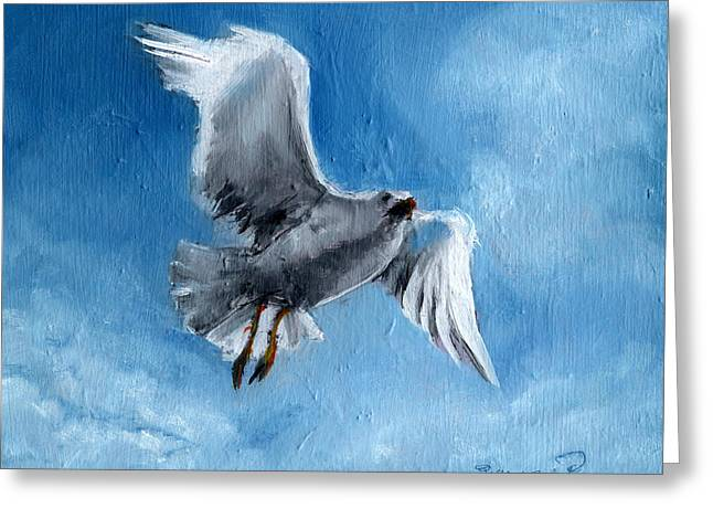 Seagull Greeting Card by Synnove Pettersen
