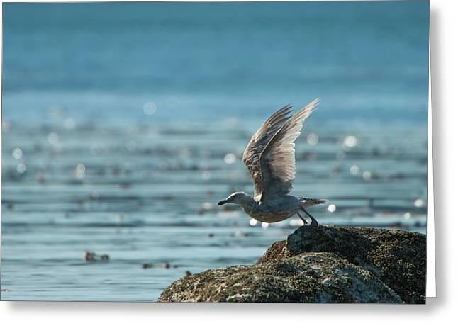 Seagull Takeoff Greeting Card
