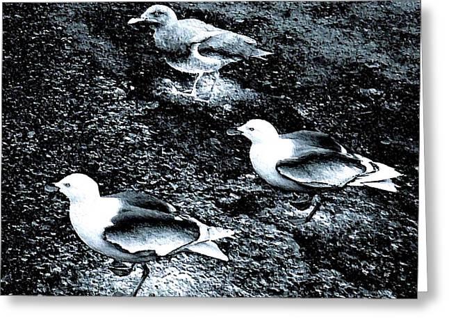 Seagull Trio Greeting Card