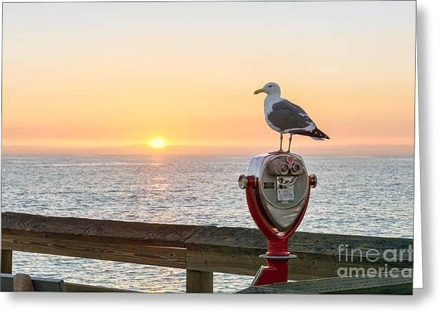 Seagull Watching The Sunset Greeting Card by Eddie Yerkish