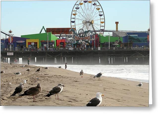 Seagulls And Ferris Wheel Greeting Card