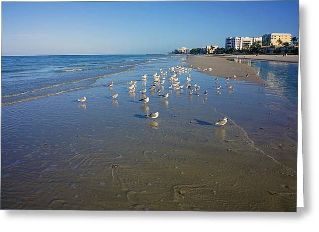 Seagulls And Terns On The Beach In Naples, Fl Greeting Card by Robb Stan