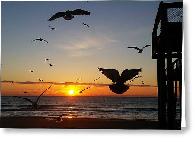 Seagulls At Sunrise Greeting Card