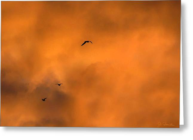 Seagulls At Sunset Greeting Card by Joe Bonita
