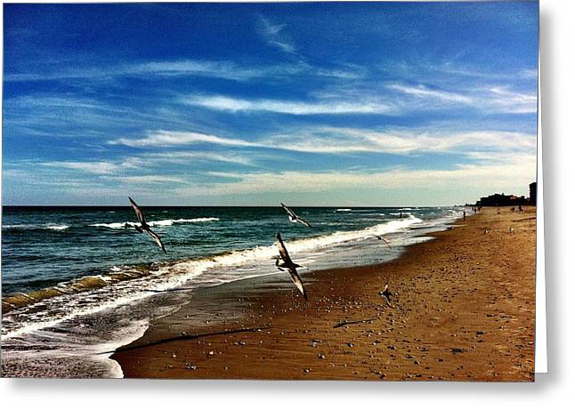 Seagulls At The Beach Greeting Card by Carlos Avila