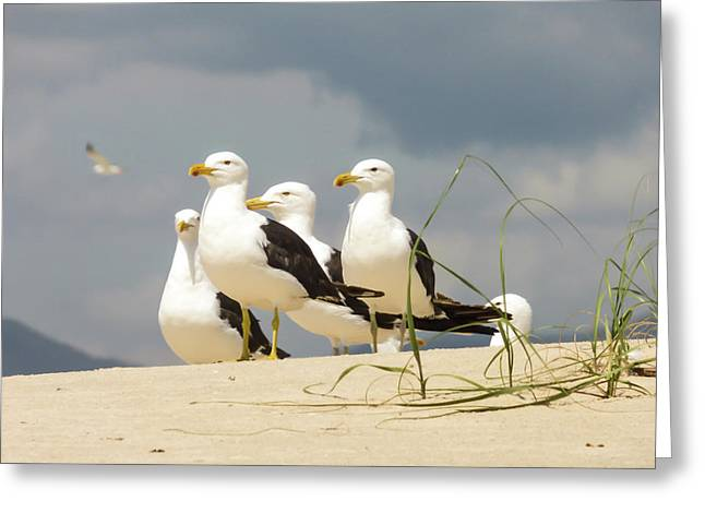 Seagulls At The Beach Greeting Card