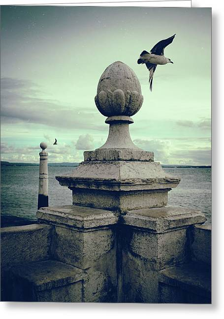 Seagulls In Columns Dock Greeting Card by Carlos Caetano