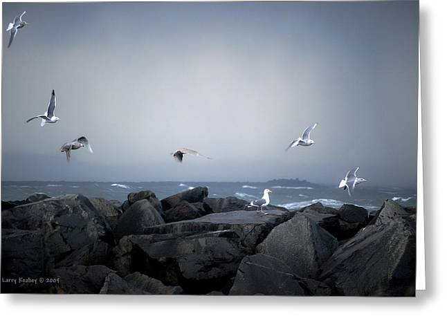 Greeting Card featuring the photograph Seagulls In Flight by Larry Keahey